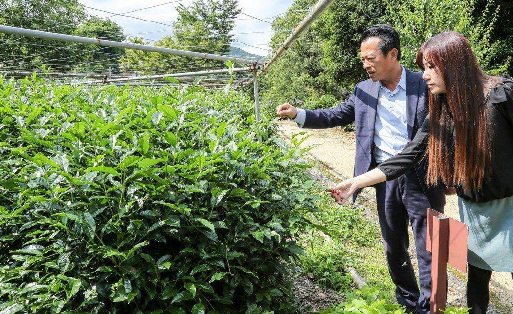 翁章梁訪日本靜岡茶園。圖/ 翁章梁團隊提供