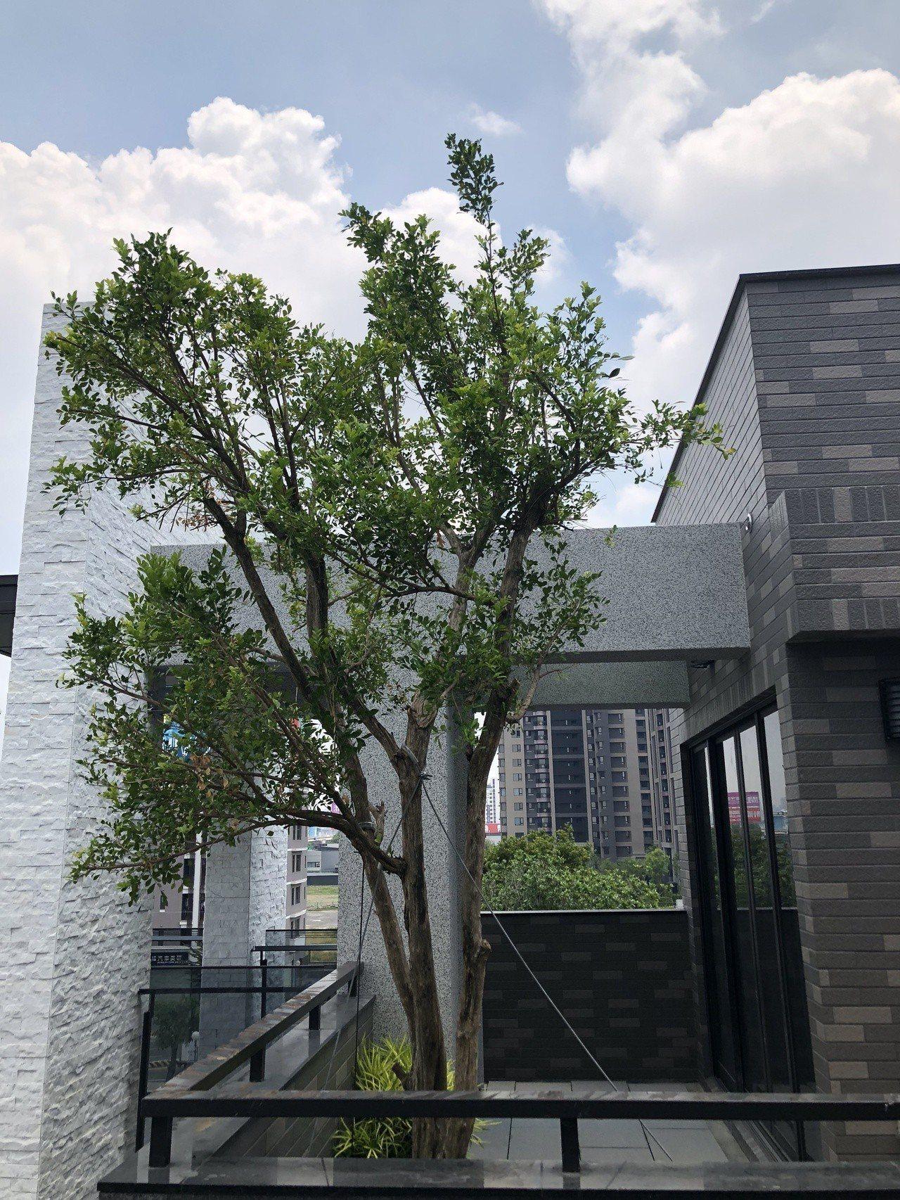 「悠久自若」為了把自然引進家中,規劃有前庭後院、大樹陽台、空中花園、天井花園等,...