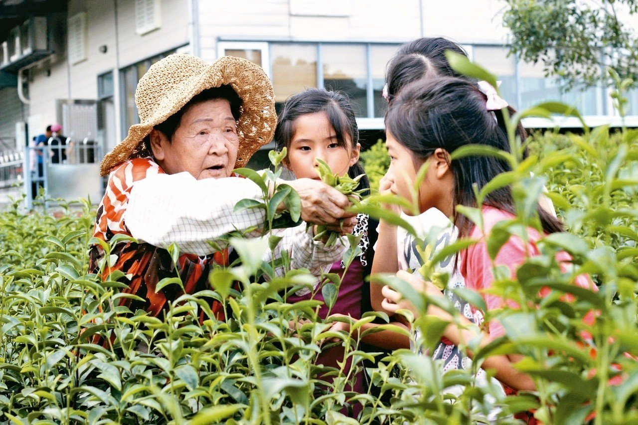 快放暑假了,快來當「小農職人」,體驗採茶樂趣。