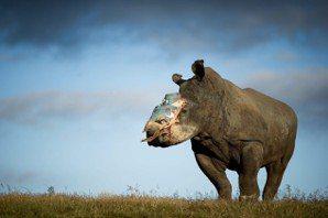黃宗慧/看見野生動物:《別讓世界只剩下動物園》推薦序