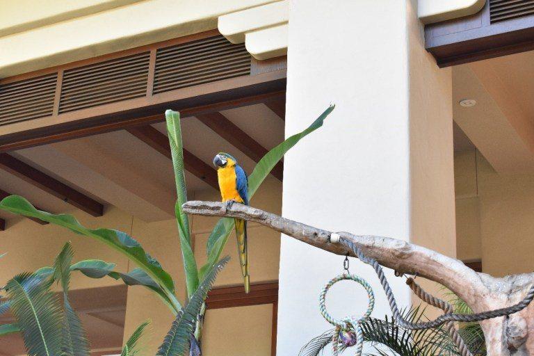 中庭有三~四個鸚鵡展示區 ,旁邊還有一個籠子住著一隻比較小的,不同品種的鸚鵡,不...