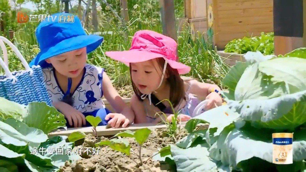咘咘與大麟子在菜園中甜蜜蜜。圖/擷自YouTube