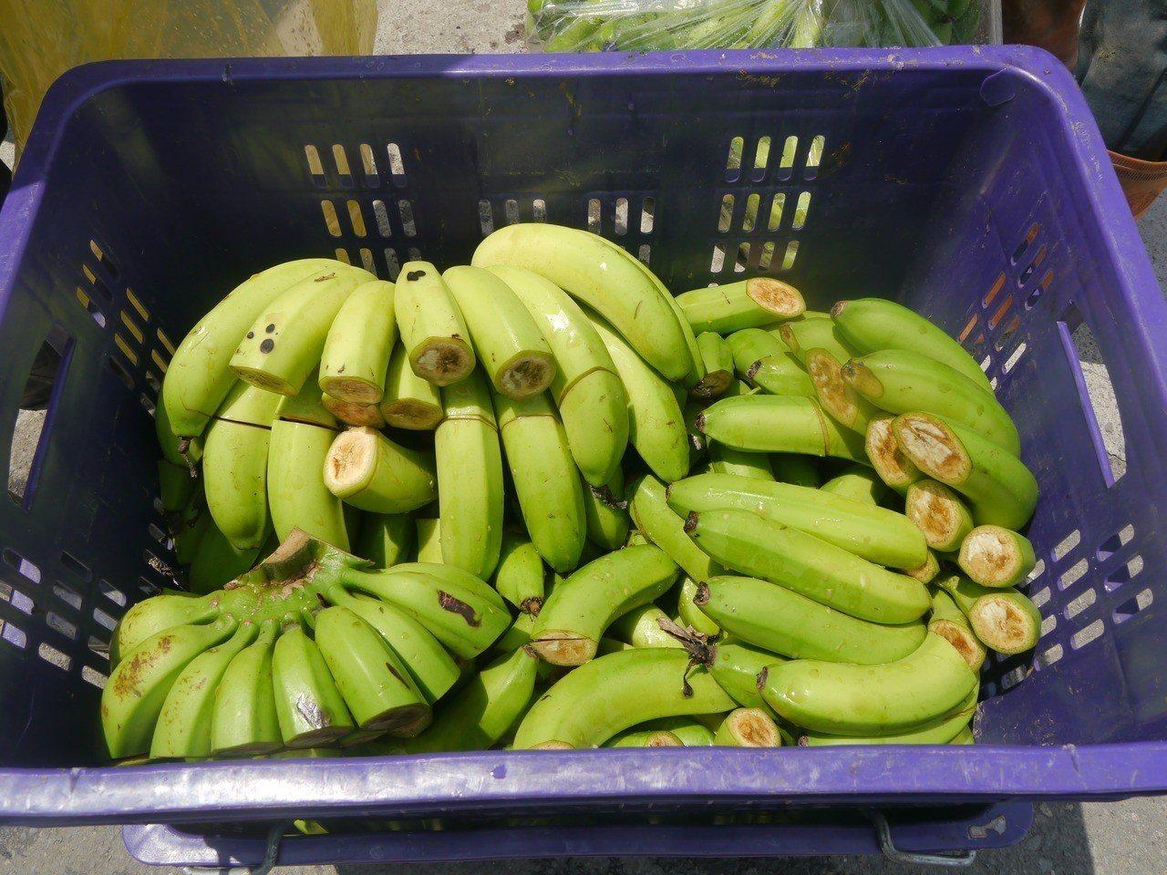 因擔心格外品流入市面,收購人員刻意損壞香蕉。記者徐白櫻/攝影
