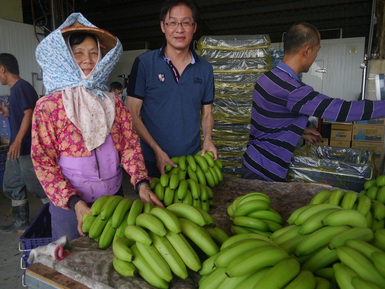 旗山、美濃兩農會直接向農民購買青蕉,有效拉抬產地價格。記者徐白櫻/攝影