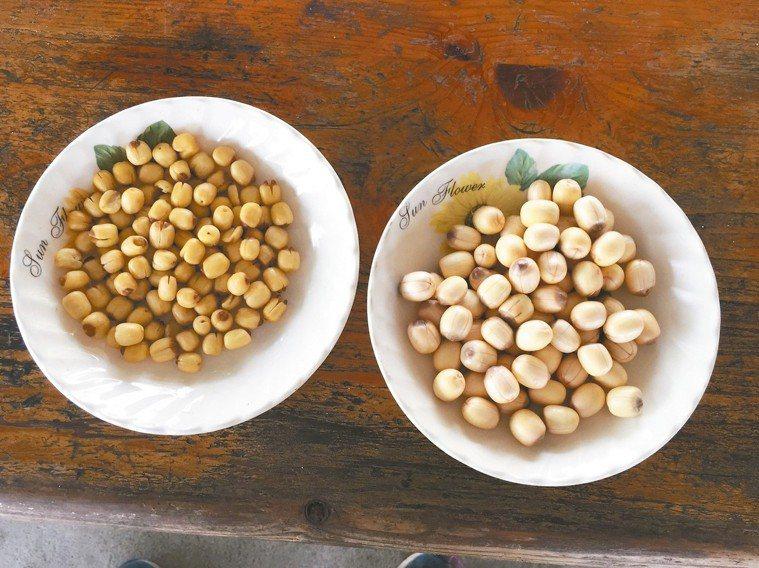 右為白河在地蓮膜帶芯的蓮子,左為越南進口蓮子。 記者吳政修/攝影