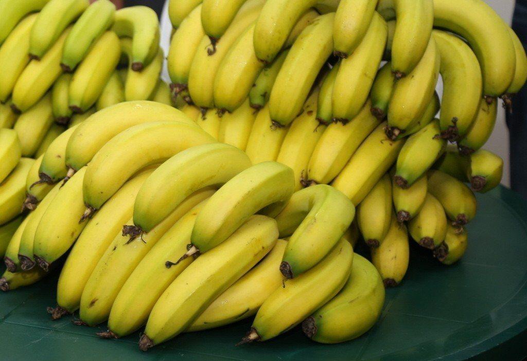 香蕉盛產,蕉價慘跌,農民採收不符成本。行政院農業委員會今天表示,有關媒體報導台農...