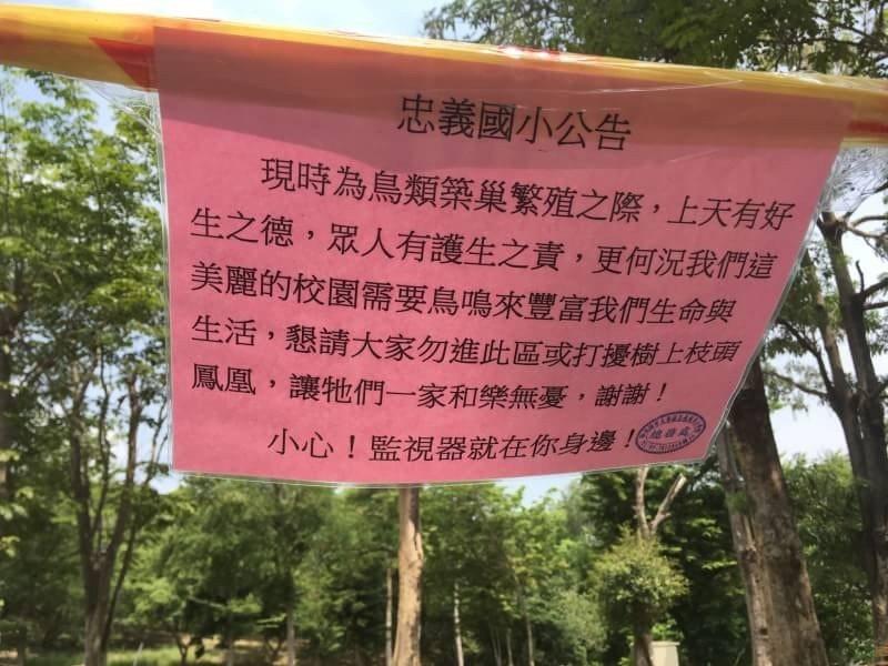 高雄市大寮區忠義國小立告示牌籲請民眾不要干擾黃鸝孵育。圖/高雄鳥會提供