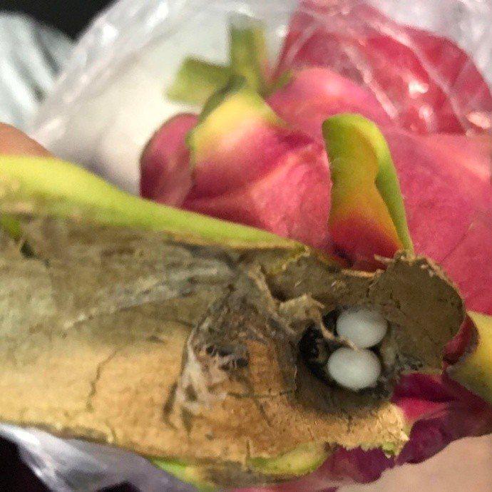 火龍果裡有壁虎蛋。取自微博