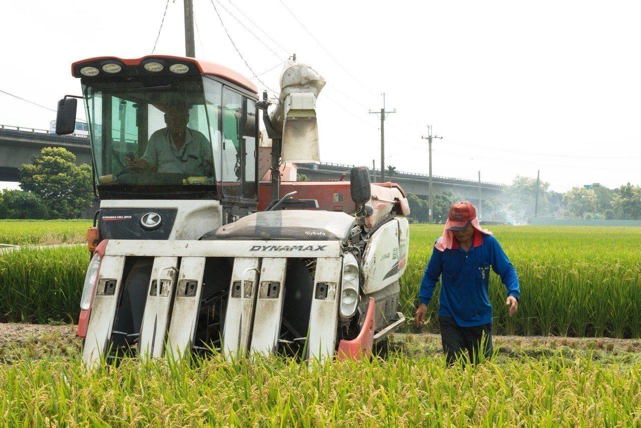 雲林縣一期稻作開始收割,收購價較往年低,反觀斗南鎮農會與農民契作越光米,每百台斤...