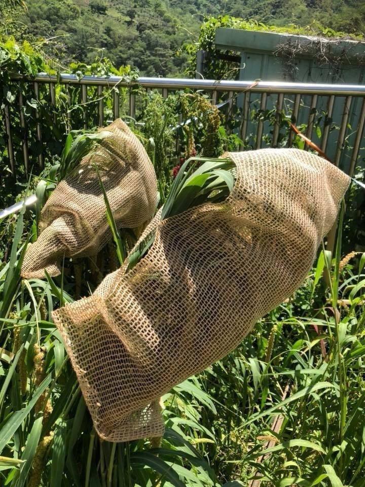 小朋友想出用套袋包住小米。圖/鄭佩茜提供