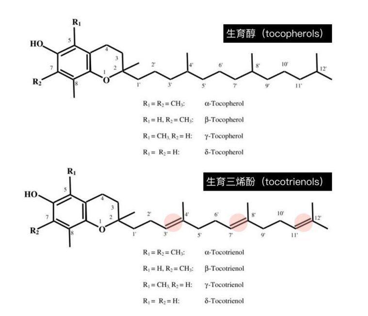 生育醇與生育三烯酚的結構。圖片來源:( Ref. 4 ) 圖片提供/MedPar...