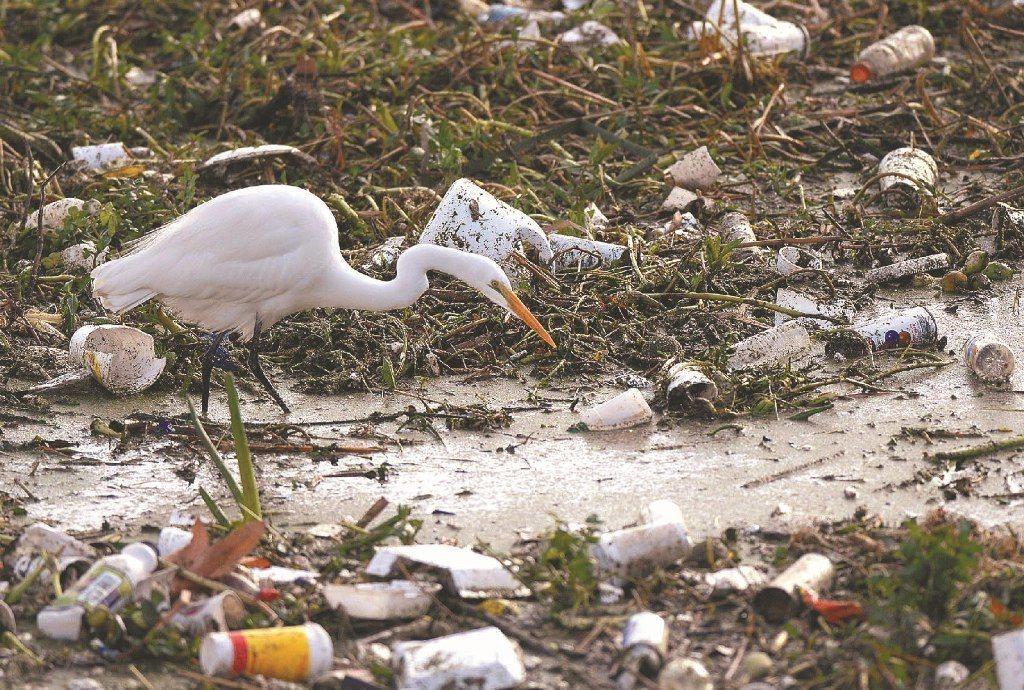 塑膠垃圾已嚴重生態問題。圖/路透社