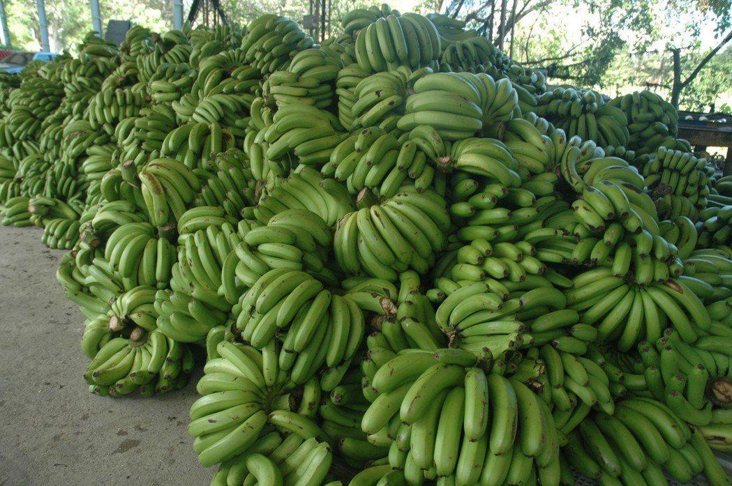 香蕉生產過盛價格崩跌。記者吳淑玲/攝影