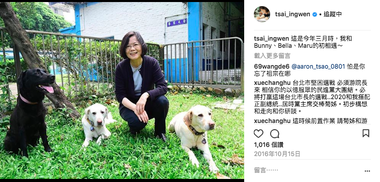 蔡總統領養的3隻退役導盲犬Bella、Bunny、Maru,也曾躍上總統IG。圖...