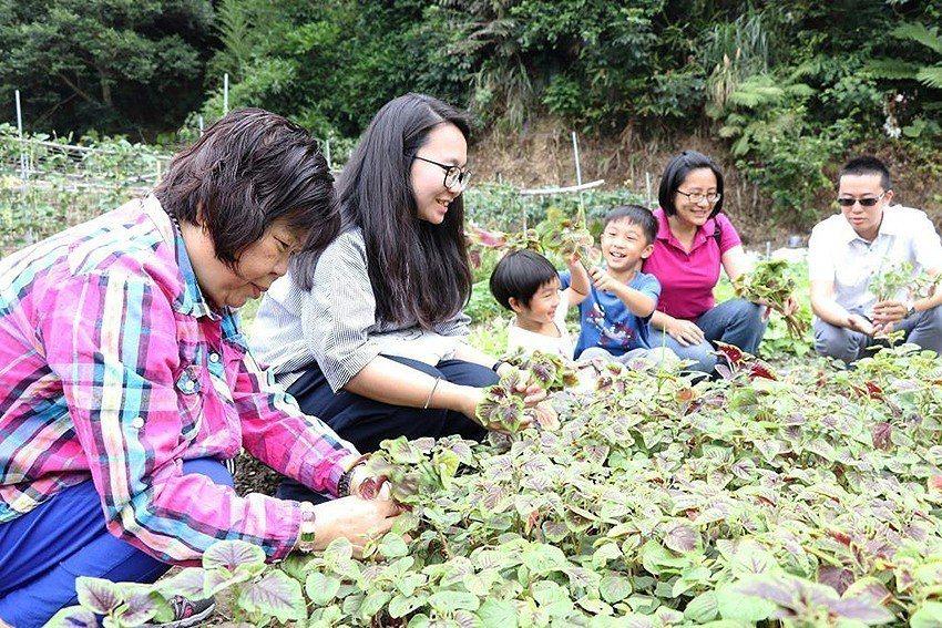 安排樂齡朋友與親友在綠意盎然農園享愜意時光。 十三行博物館/提供