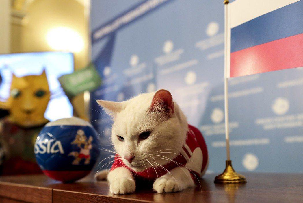 本屆世足東道主俄羅斯,派出神貓「阿基里斯」預測賽事結果。 歐新社