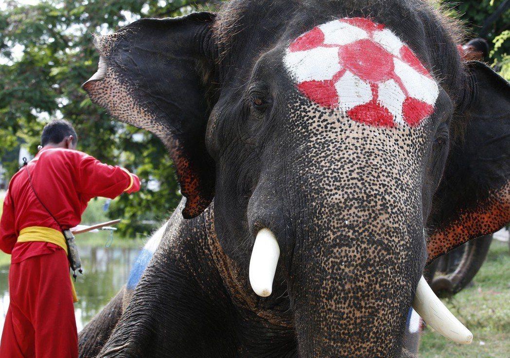 大象也來參一腳?2018俄羅斯世界盃前夕,泰國舉辦由大象參賽的模擬世足賽。 歐新...