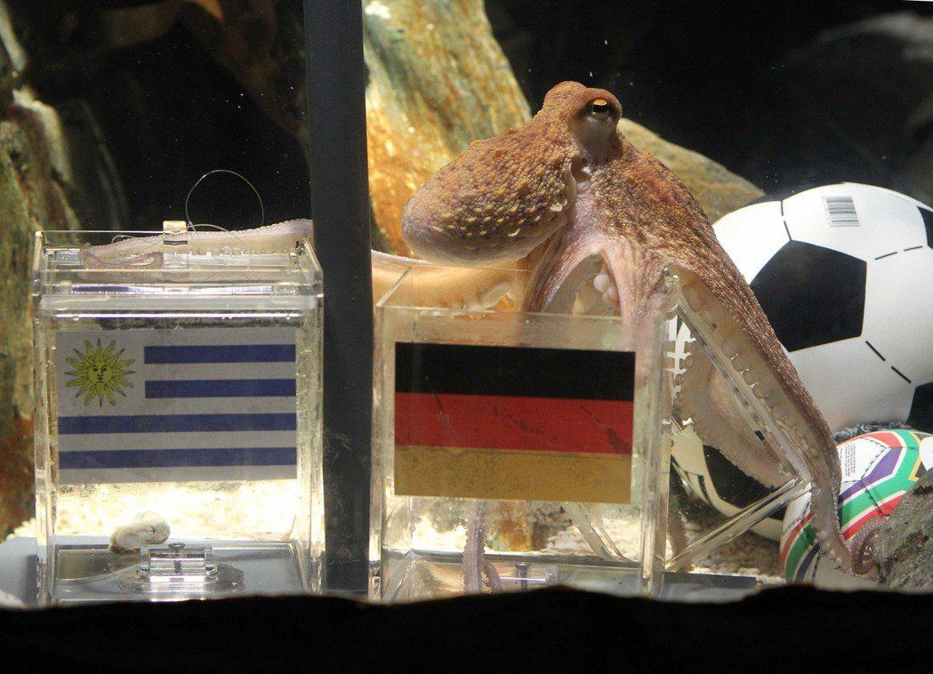 德國章魚哥「保羅」2010年7月9日在德國奧伯豪森水族館預測世足戰果。 新華社