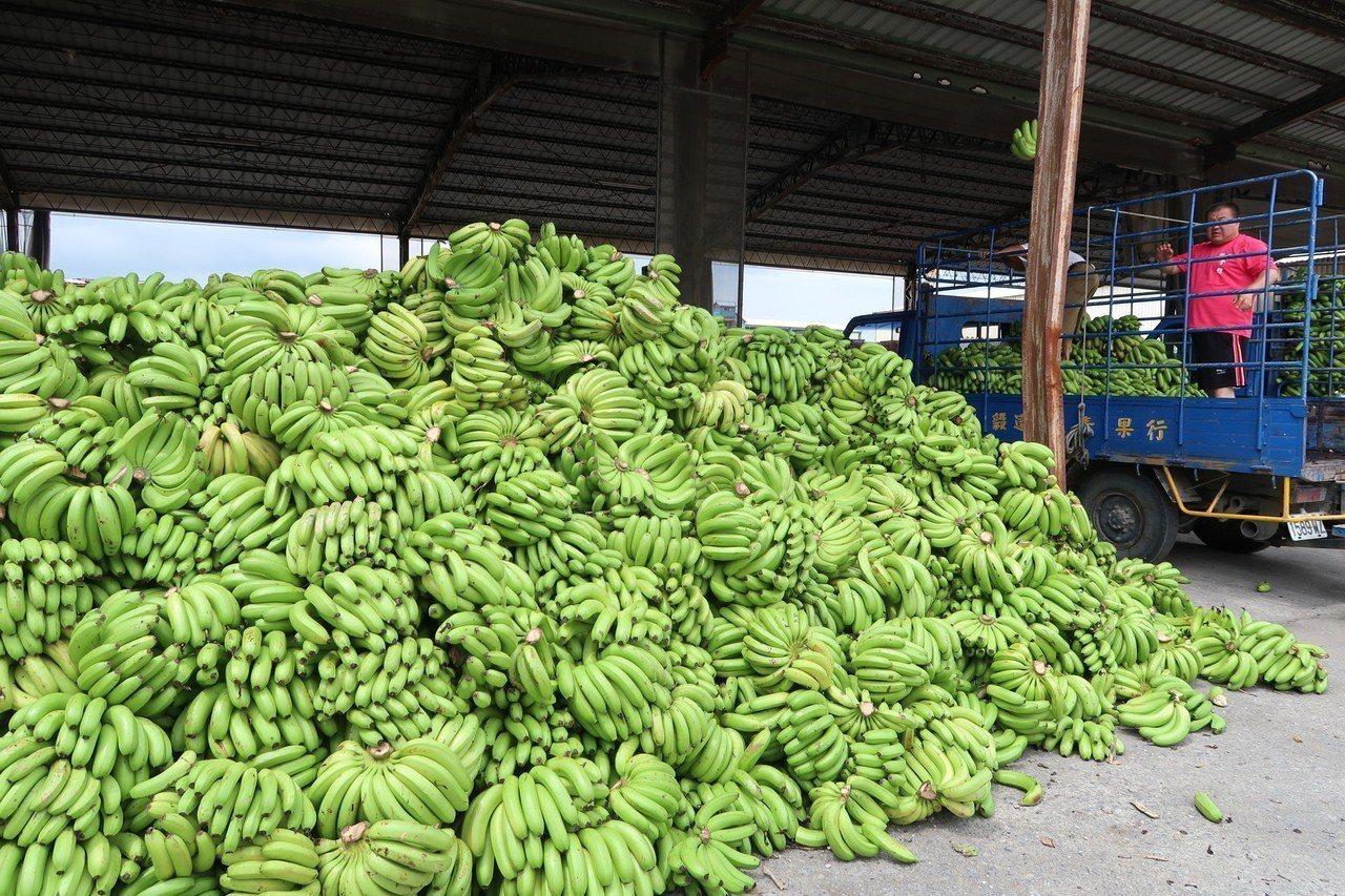 台灣蕉價日前崩跌,從中央、地方到不少企業都出手試圖協助香蕉產量過剩的問題。 聯合...