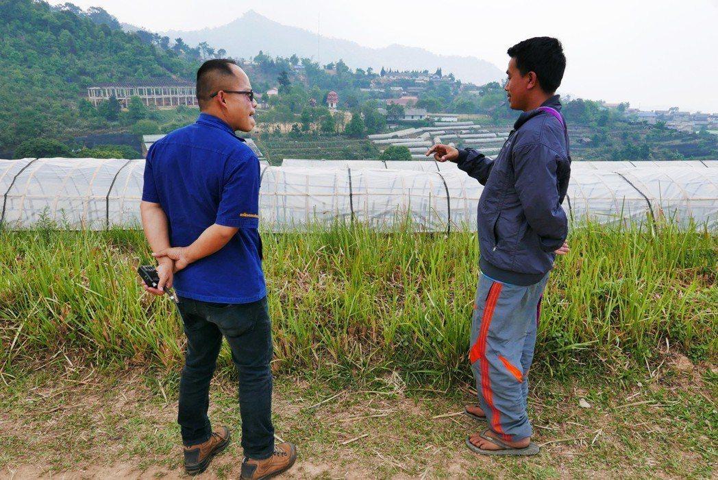 安康皇家農場的技師和少數民族農民討論作物收成,最遠方的山稜即為緬甸。 圖/作者許...