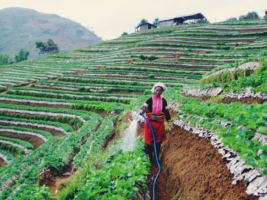 永續成就的光芒背後,卻也有著難以維持的隱憂。而其隱憂來源,正是皇家農場所在的邊境...
