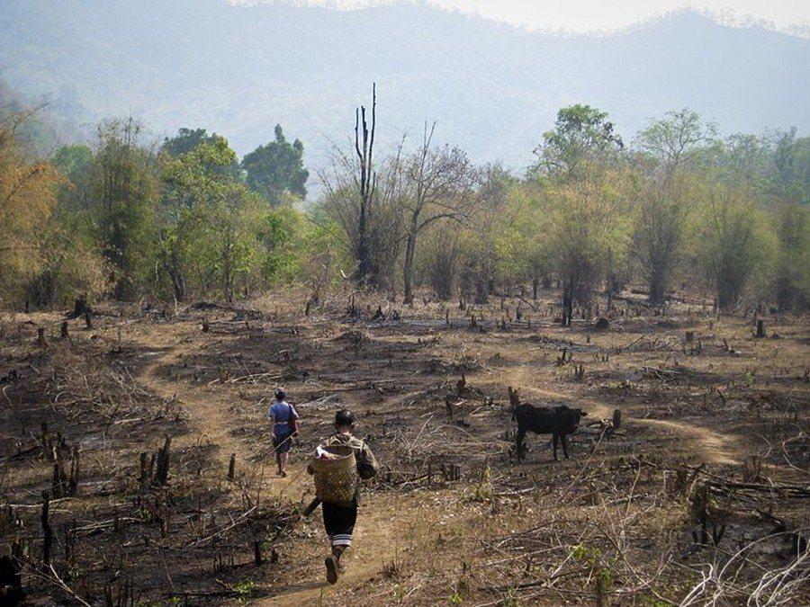 在過去,缺乏森林覆蓋大多歸因於當地少數民族的傳統耕作方式。圖為泰北的刀耕火種耕地...