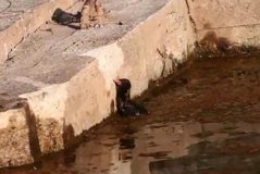 影╱金門紅冠水雞幼雛險溺斃 民眾痛批「兩光工程」