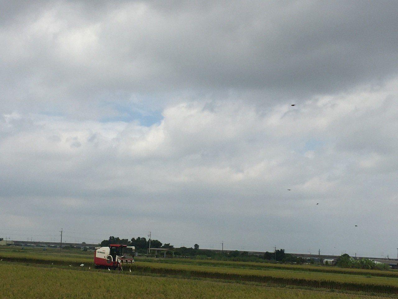 農民今天上午8點多,趁還沒下雨收割一期稻作。記者吳政修/攝影