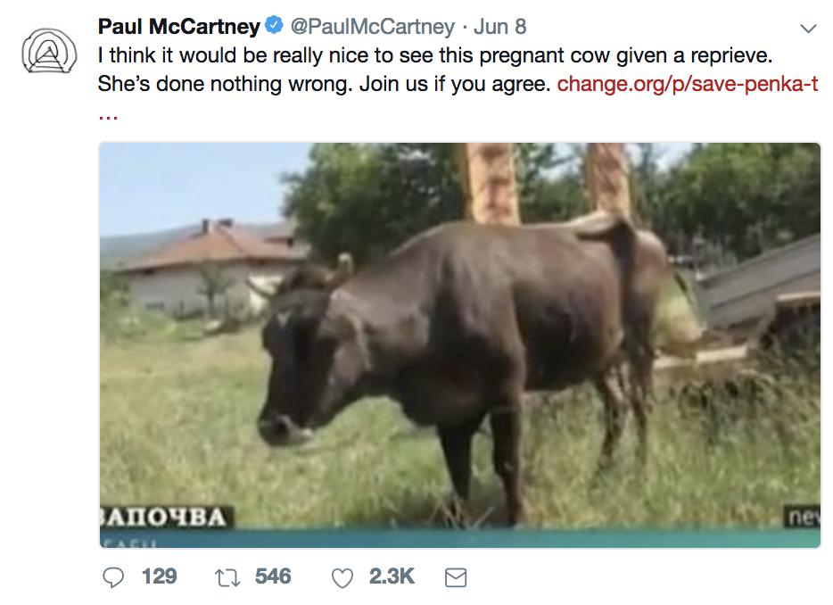 保羅麥卡尼推文寫道:「她(潘卡)沒有做錯任何事。」取自保羅麥卡尼推特