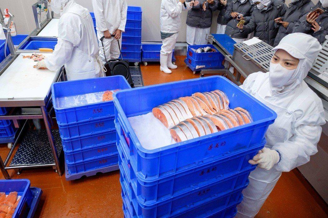 五股PC廠的自動鮭魚切片機,輪切平均每片厚度約2cm(大拇指寬),維持最適合烹飪...