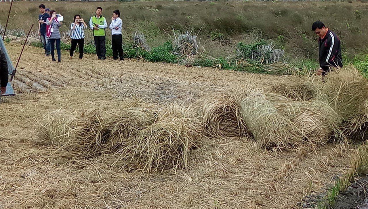 台中市利用稻稈高熱值變成綠能發電,未來每年可處理5萬公噸,發電量約2490萬度,...