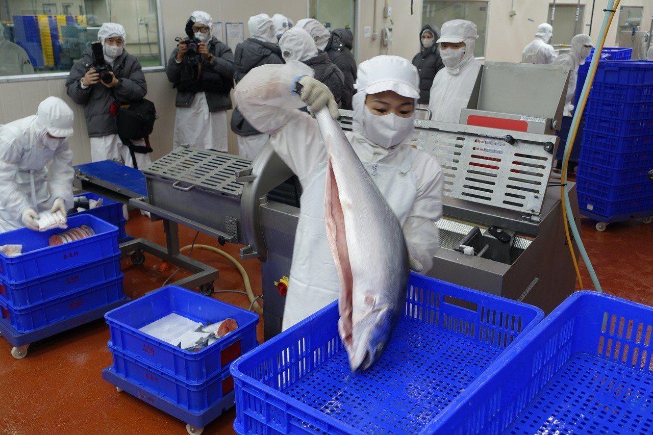 全聯五股PC廠引進自動鮭魚切片機,每小時100至105尾鮭魚平均可產約1,500...