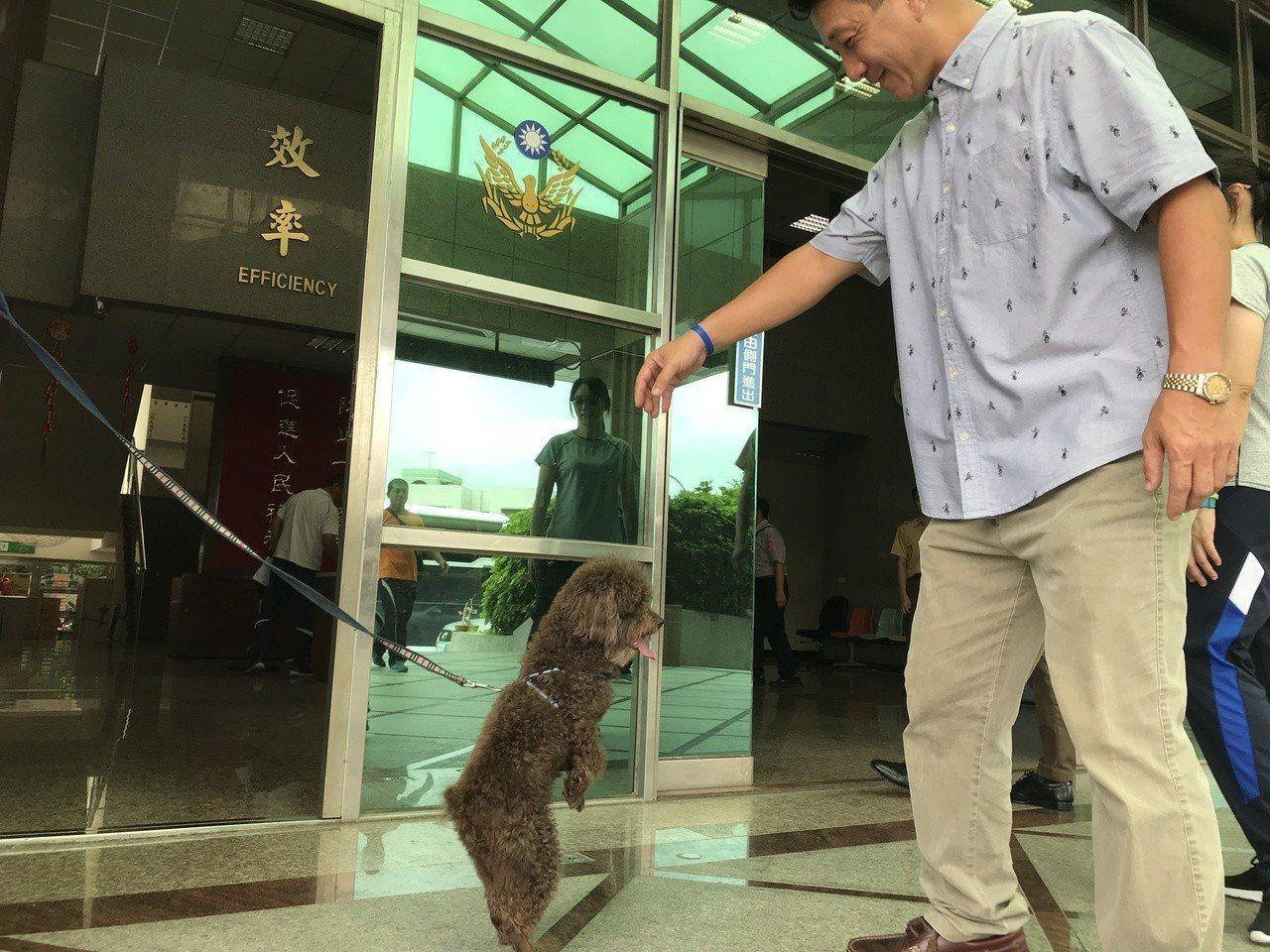 今年5歲的貴賓犬「巧克力」走失,跑到桃園八德警分局向警察求助。記者許政榆/攝影
