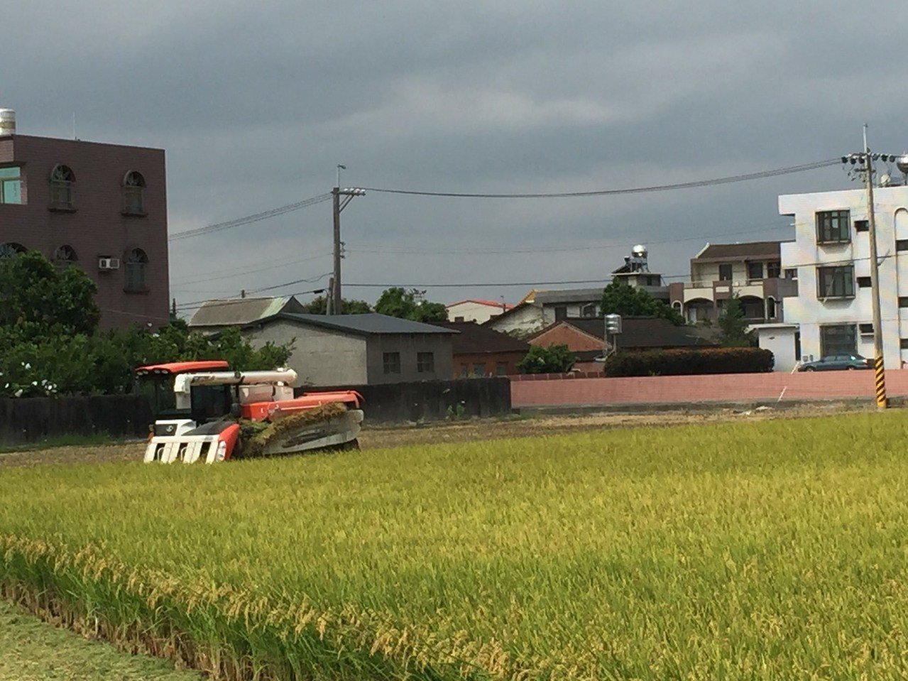 台南市後壁地區稻農昨天一早趁還沒下雨,搶收一期稻作。 記者吳政俢/攝影