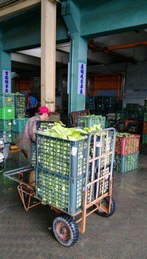 高雄梓官蔬菜專區趁大雨來襲前先搶收蔬菜,昨天到貨量約五噸。 圖/高雄市農業局提供