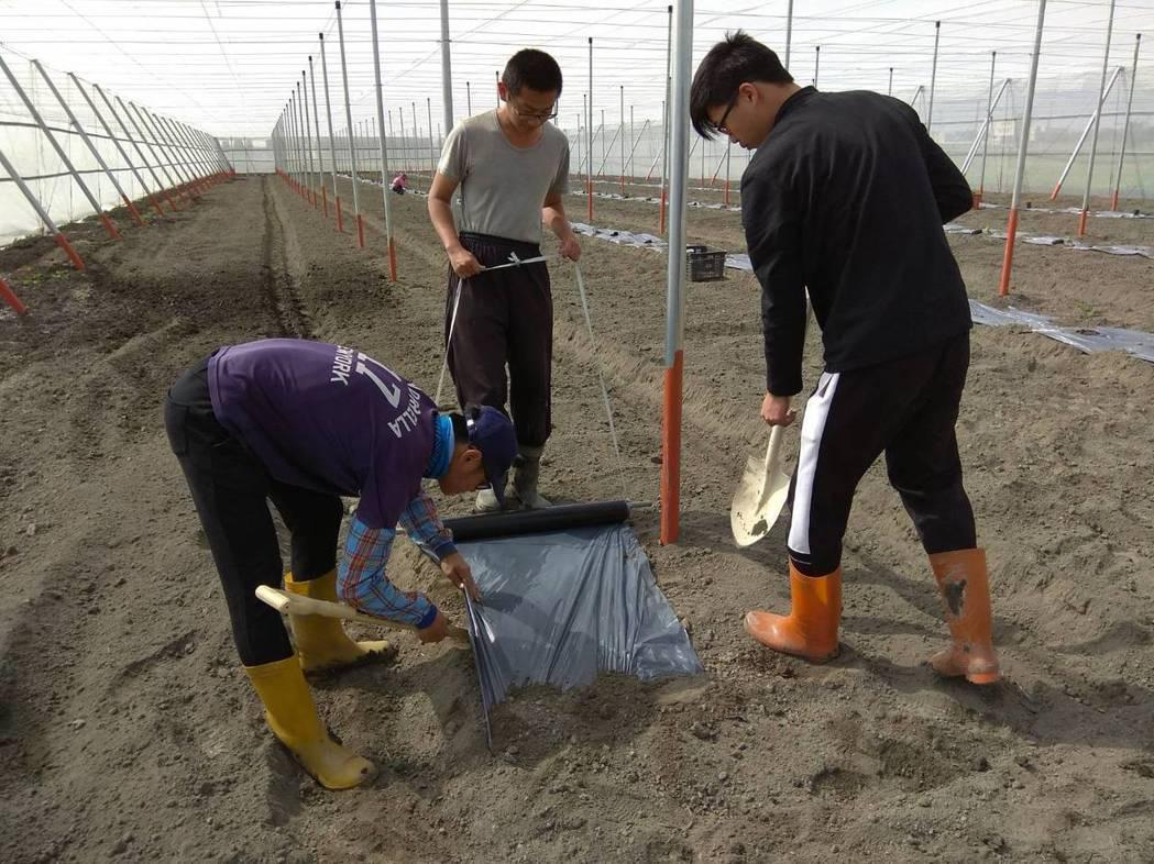 明道大學精農系學生協助彰化百大青農種植百香果。 明道大學/提供。