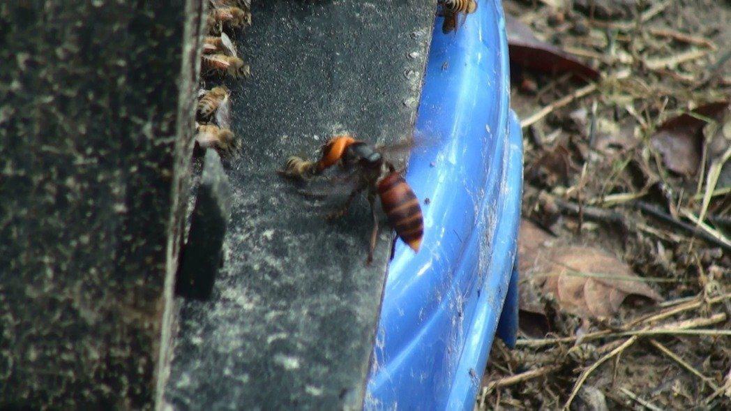 男暖東峽谷遭虎頭蜂螫咬動不了 消防員上山救援