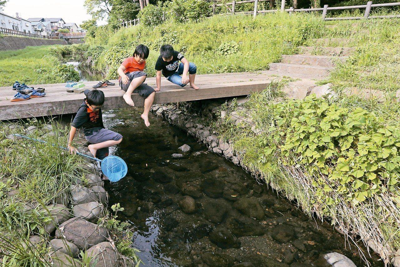 放學時分,日本橫濱市西側的和泉川裡(見圖)幾個孩子光腳丫下水,手拿著魚網在岸邊掃...
