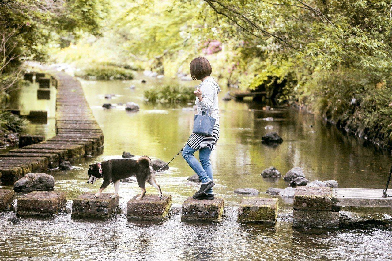 清流蜿蜒的源兵衛川,是三島市民的療癒水岸。 記者黃仲裕/攝影
