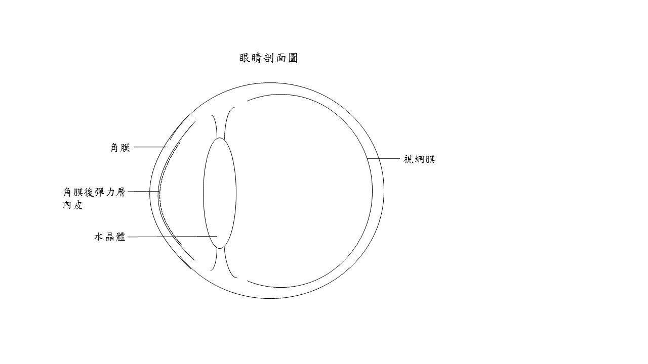 眼球剖面圖。 圖/北榮提供