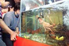 陳玉敏/夾娃娃機夾活龍蝦?牠可以吃,不代表牠可以被戲謔!