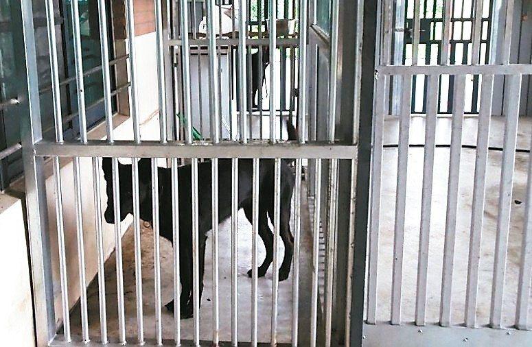 消防署搜救隊中部分隊傳出負責飼養搜救犬的隊員,涉嫌以不實發票浮報詐領公款。 記者...