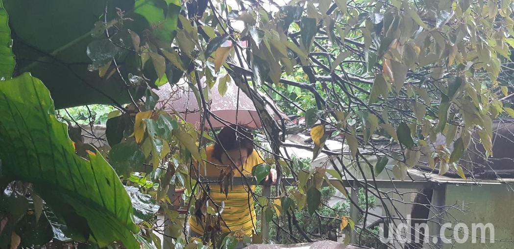 坡上住戶聽聞發生坍方意外,趕緊探頭查看。記者賴郁薇/攝影