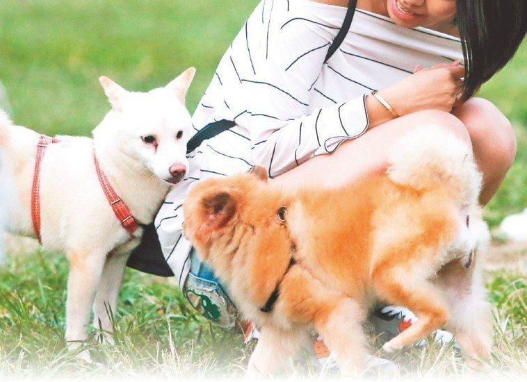 夏天的酷暑容易讓狗狗生病。 報系資料照