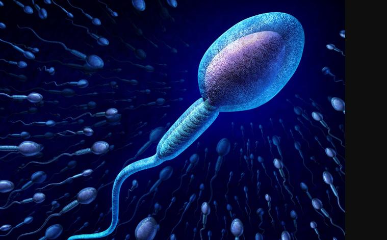 精子示意圖。ingimage