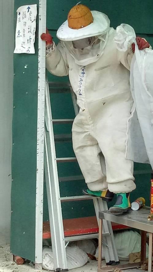 動保處人員捕捉虎頭蜂。圖╱新北市動保處提供