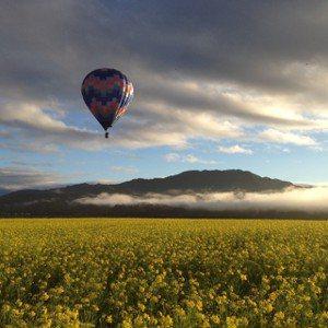 輕鬆乘著色彩繽紛的熱氣球飛越池上上空,享受翱翔天際,360度遠眺群山綠野的熱氣球...