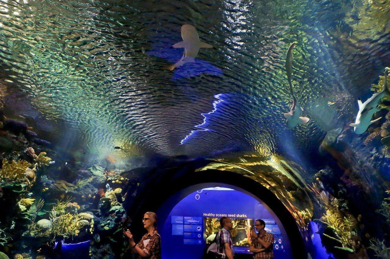 遭超級風暴珊迪重創的紐約水族館,六年後仍在重建,但新展登場。 美聯社