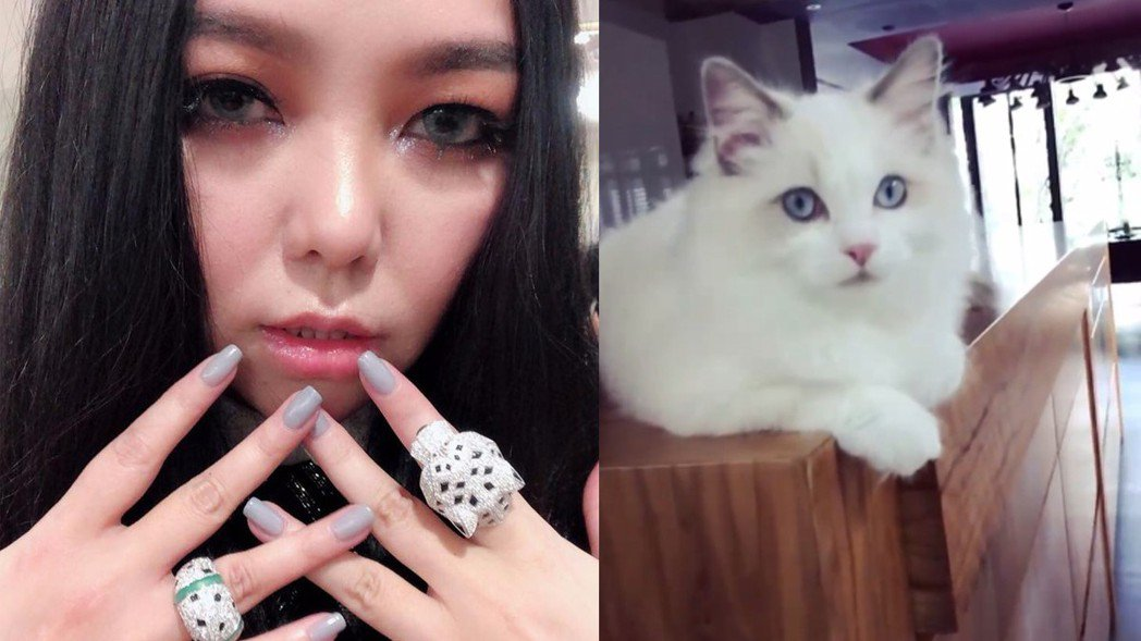 阿妹曾在臉書中曝光自己養的貓咪 (圖右)。圖/擷自張惠妹 A-mei/A-mit