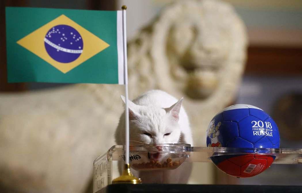神貓阿基里斯先前預測巴西獲勝。 路透